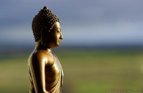 Thấy Vô ngã là thấy Pháp, thấy Phật