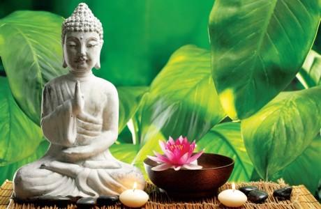 Suy nghiệm lời Phật: Nhìn trái mà thấy người