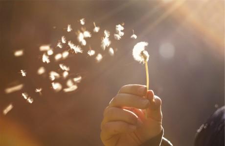 Thế thái nhạt nhòa, hoa sầu rơi rụng, nhân tình tựa như giấy mỏng bay