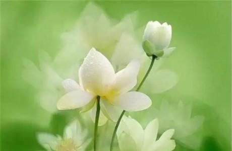 Miệng nói lời thiện thì tạo thiện duyên, miệng phú quý thì phúc khí tự đến