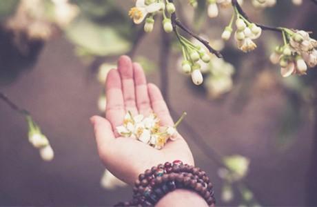 Những lời Phật dạy sâu sắc trong Kinh lòng ham muốn dẫn đến đau khổ
