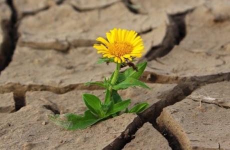 Đâu mới là bông hoa đẹp nhất trên đời?